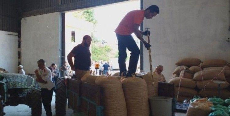 Akçakoca'da TMO fındık alımlarına devam ediyor