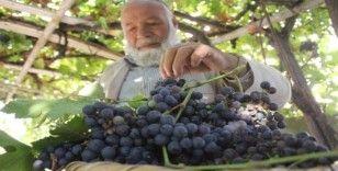 Van'ın yerli üzümlerinde hasat zamanı