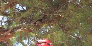 Burhaniye'de ağaçta mahsur kalan kediyi itfaiye kurtardı