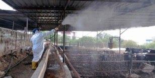Tarım ve hayvancılık yapılan alanlar aralıksız ilaçlanıyor