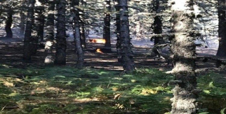 Kütahya'da orman yangını