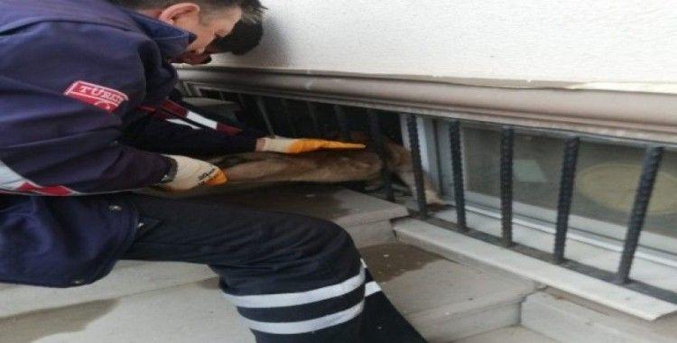 Demir korkuluklara kafası sıkışan yavru köpeği itfaiye kurtardı