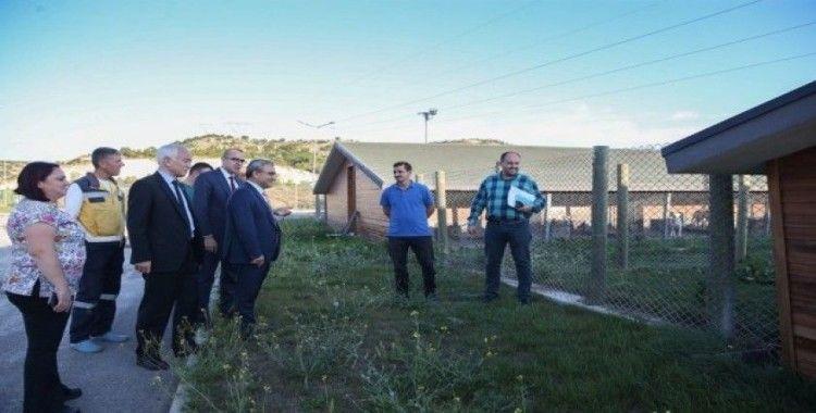 """Başkan Alim Işık: """"Bölgenin en modern hayvan barınağı Kütahya'da"""""""