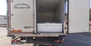 Kargı'da 2 ton kaçak balık yakalandı
