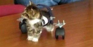 Felçli kedi, öğrencilerin sevgisiyle yürümeye başladı