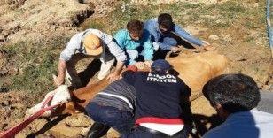 Bingöl'de bataklığa saplanan inek kurtarıldı