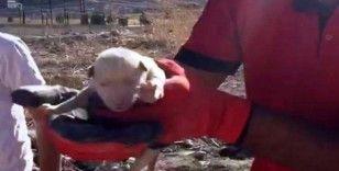 Kayalıklara sıkışan yavru köpek kurtarıldı