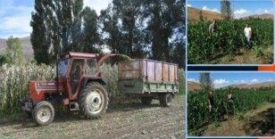 Bayburt'ta silajlık mısır ve yonca hasadı başladı