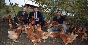 Ordu'da organik yumurta üretimi artıyor
