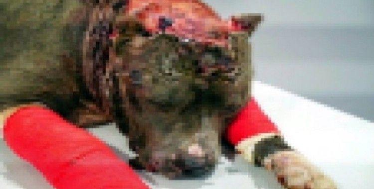Kaçak avcılara ve hayvanlara işkence yapanlara ceza yağdı