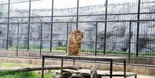 Hayvanları Koruma Günü'nde, Tarsus Hayvan Parkı'na girişler ücretsiz