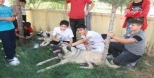 Evde besledikleri hayvanlarla okula geldiler