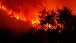 Bursa'daki orman yangınının bilançosu havadan görüntülendi