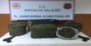 Jandarma aradığı uyuşturucuyu arı kovanının içinde buldu