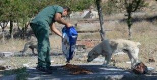 Sokak hayvanları Altındağ Belediyesi'ne emanet