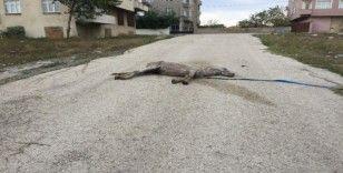 Ölen at yol ortasında sahipsiz kaldı