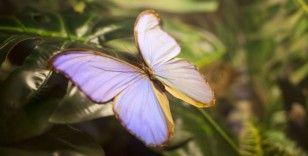 'Fotoğraf stüdyosu' gibi kelebek bahçesi