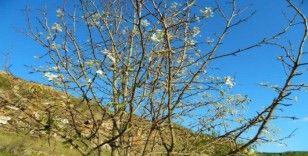 Posof'ta sonbahar ve ilkbahar birlikte yaşanıyor