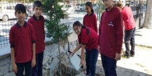 Ortaokul öğrencileri ağaç bakımı yaptı