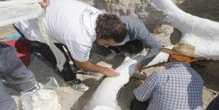 Kayseri fosilleriyle gündemde