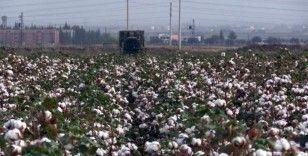 Pamuk üreticilerinden 'prim desteği artırılsın' talebi