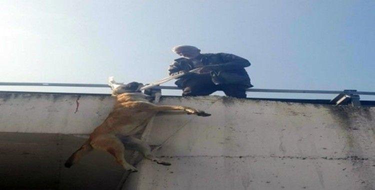 Köpeği boynundan köprüye astı