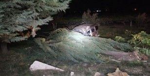 Hafif ticari araç çarptığı ağacın altında kaldı: 1 ölü, 1 yaralı