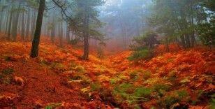 (Özel) Kazdağları'nın kestane ormanları sonbahar renkleriyle büyük ilgi çekiyor