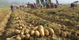 Patates üreticisinde 1,5 lira beklentisi