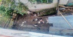 Mahalleye giren köpek 75 tavuk, 10 hindiyi telef etti