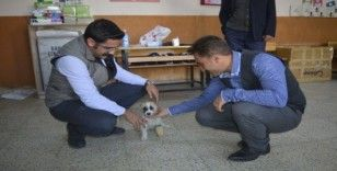 Köy okulu yavru köpeğe yuva oldu