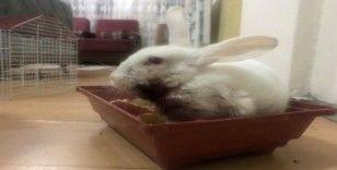 (Özel) Minik Zübeyda, yaralı tavşanı için yardım bekliyor