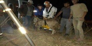 15 metrelik su kuyusuna düşen koyunu AFAD kurtardı