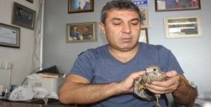 Yaralı Şahin'i tedavisi için yetkililere teslim etti