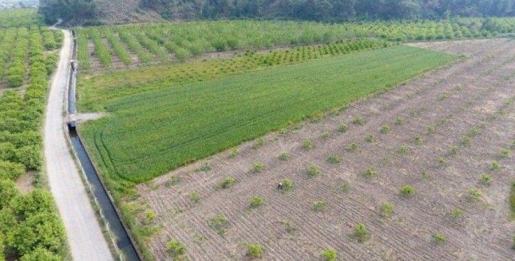 Muğla'da 121 bin 300 dekar tarım arazisi sulandı