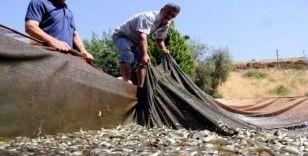 Denizi olmayan Manisa'nın yüzü balıkçılıkla gülecek
