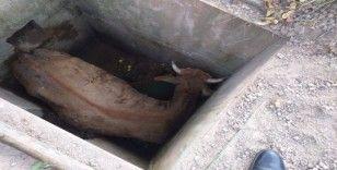 Kuyuya düşen inek itfaiye ekiplerince kurtarıldı