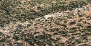 Ölüdeniz Hava Oyunları'nda paraşüt kazası: 1 ölü, 2 yaralı