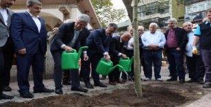 Kesilen tarihi çınar ağacının yerine yenisi dikildi