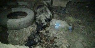 İtfaiye ekipleri yavru köpeği boğulmaktan kurtardı
