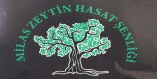 Milas 6. Zeytin Hasat Şenliği 2 - 3 Kasım'da yapılacak
