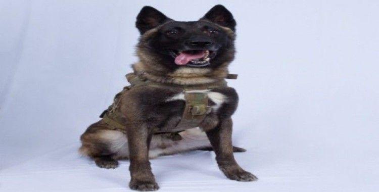 Trump, Bağdadi operasyonunda yaralanan köpeğin fotoğrafını paylaştı