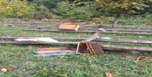Kastamonu'da ayı, 10 arı kovanını parçaladı
