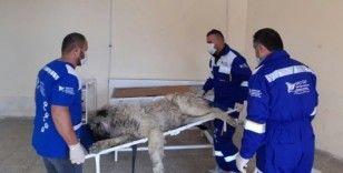 Hakkari'de sokak hayvanın bakım ve tedavileri yapıldı