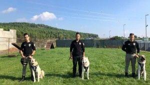 Özel köpeklerinin zorlu eğitimi görüntülendi