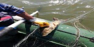 Bolu'da, kaçak avla mücadelede gölden 300 metre ağ çıkarıldı
