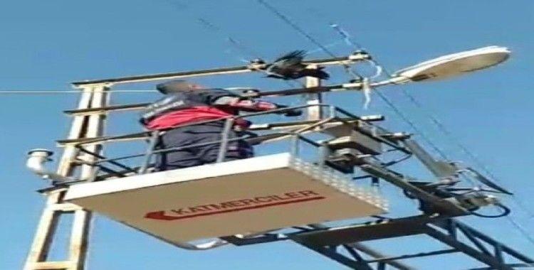 Elektrik tellerine takılan Karga'yı itfaiye ekipleri kurtardı