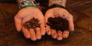 Kahve telvesi gübreye dönüşüyor