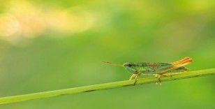Dünyada böcekler azalıyor