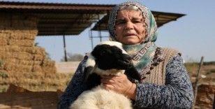 """Koyunları çalınan Ayşe teyze, 'Koyunlarımı geri getirsinler"""" diye gözyaşı döktü"""